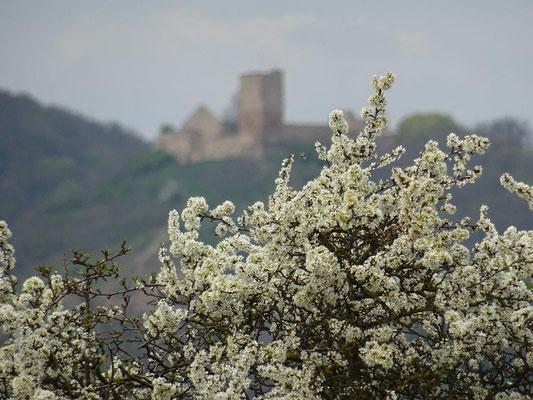 Blick zur Burg Gleichen