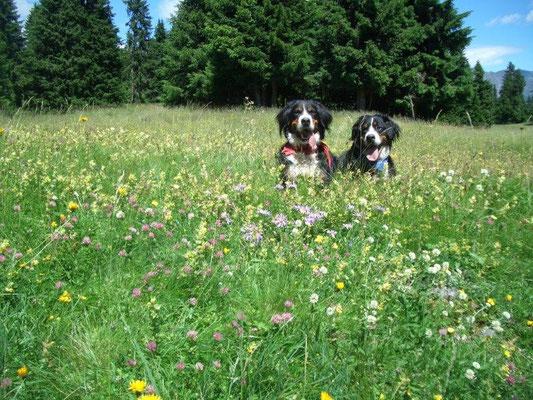 Sommerwiese auf dem Vigiljoch