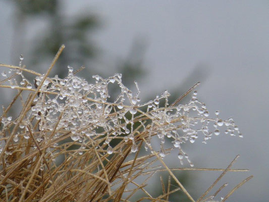 Eisige Kunstwerke der Natur