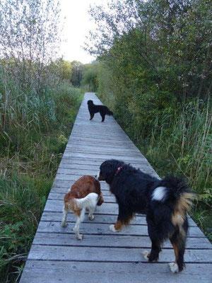 Spaziergang mit Santo von Wiesmadern