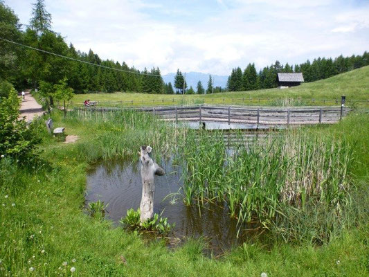 Kleiner Teich am Aufstieg zur Leadneralm