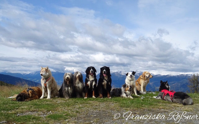 Hundegruppe an der Chemnitzer Hütte