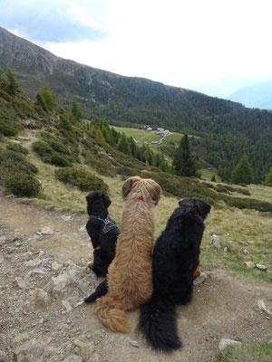 Die Hunde genießen den Ausblick zur Hirzerhütte