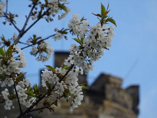 Frühling an der Mühlburg