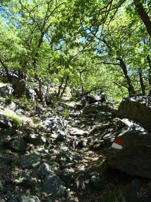 """Zugegeben """"qualvoll"""" war der steile Anstieg durch die Trumsberger Wand..."""