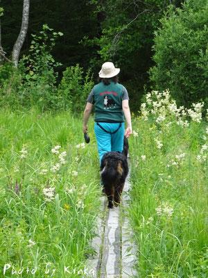 Und wie fast überall in den Schwedischen Fluß- und Moorlandschaften führt der Wanderweg über schmale Stege