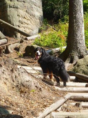 Gusti beim Aufstieg zum Marienfels