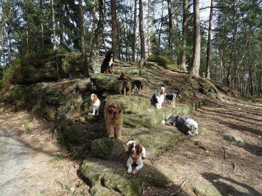 "Unser alljährlicher ""Hunde-Gruppenfoto-Felsen"" :-)"