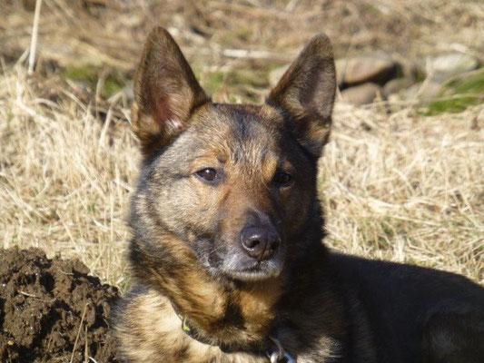 Max in der Sonne