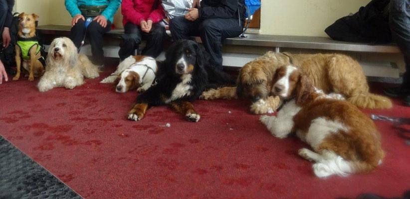 Auch die Hunde genossen die Pause im geheizten Vorraum des Fichtelberghauses
