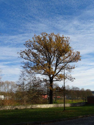 Herbst in Flöha