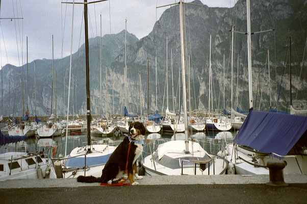 Senta im Hafen von Riva del Garda
