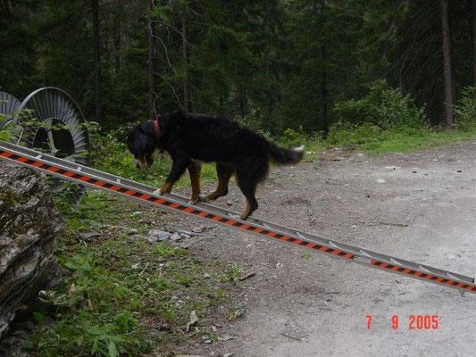Eine Trainings-Leiter an unserem Wanderweg