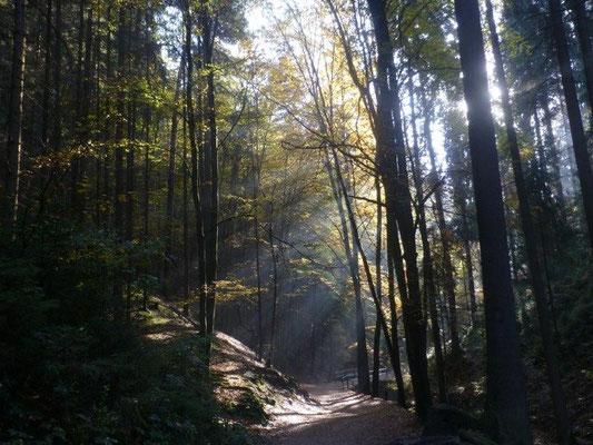 Herbst im Amselgrund