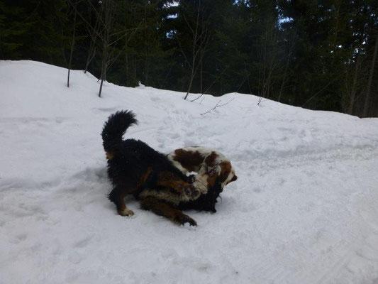 Gusti und Lilly beim Toben im Schnee