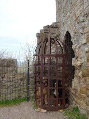 Mittelalterliche Hundebox :-)