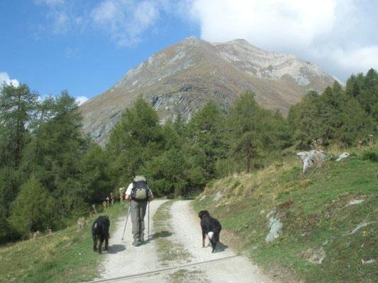 Bergtour auf den Vorderen Sajatkopf. Hier, nahe der Bodenalm, kann man das Gipfelziel schon sehen.