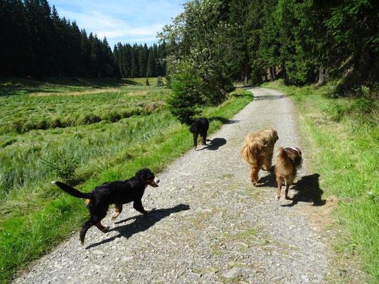 Ein bequemer Weg führt durch das Tal