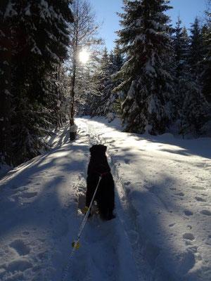 Und weiter geht's durch tief verschneiten Winterwald