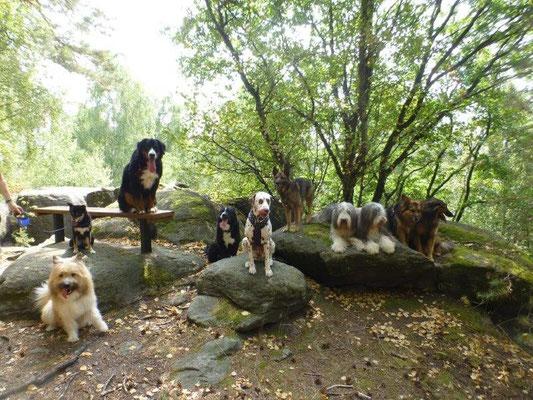 Hundewanderung auf den Zehistaler Wänden