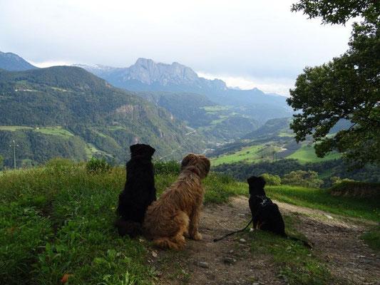 Vreni, Nepomuk und Selma genießen die Aussicht bei Barbian