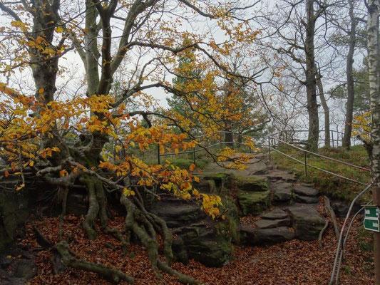 Herbst auf dem Lilienstein