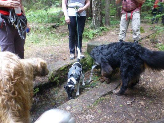 Am Kalauschenborn konnten unsere Fellnasen ihren Durst löschen