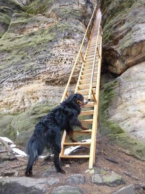 Am Sachsenstein konnten wir sie gerade noch daran hindern, hinaufzukraxeln. Dieser Aufstieg ist für Hunde definitiv nicht geeignet.