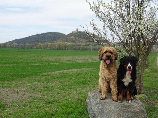 Blick vom Grafenbrunn zur Burg Gleichen