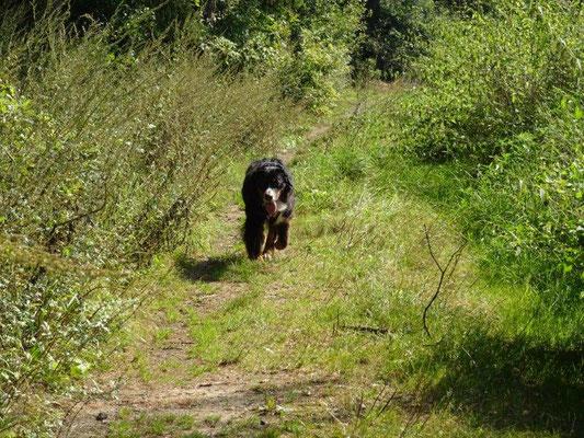 Einsame Pfade am Bärenstein