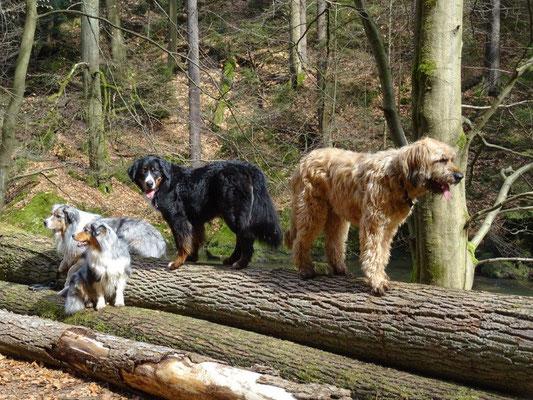 Cosmo, Faye, Vreni und Nepomuk Posen auf dem Baumstamm