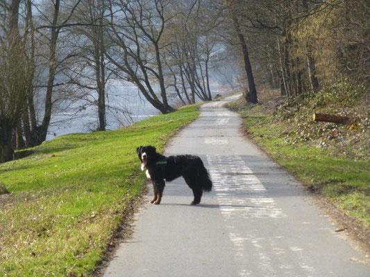 So leer wie hier ist der Elberadweg wahrscheinlich nur an kalten Wintertagen.