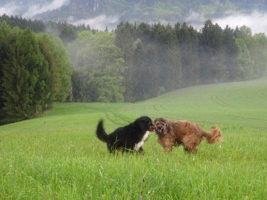 Vreni und Nepomuk hatten Spaß im nassen Gras
