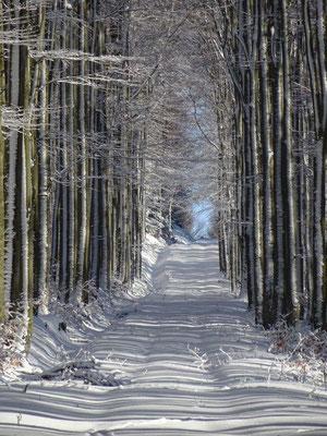 Die Geometrie des Winters