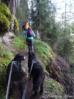 Aufstieg Richtung Alprechtalm und Stegeralm