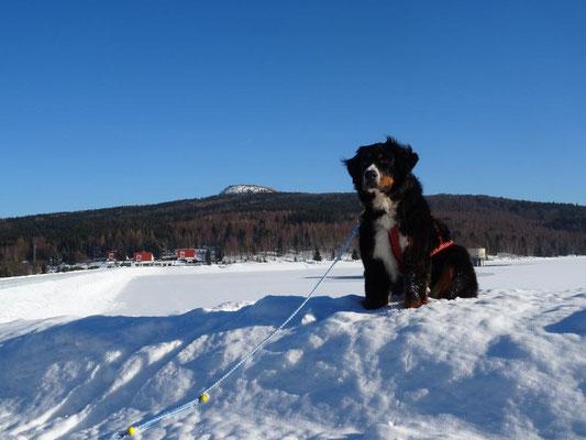 Vreni an der Preßnitz-Talsperre - im Hintergrund der Hassberg