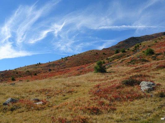 Herbstliche Bergwiesen