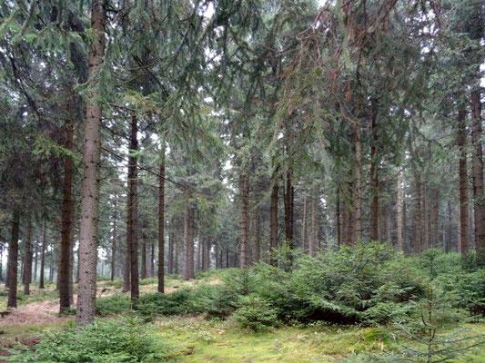 Erzgebirgswald
