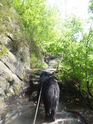 Im Steilstück der Rotkehlchenstiege