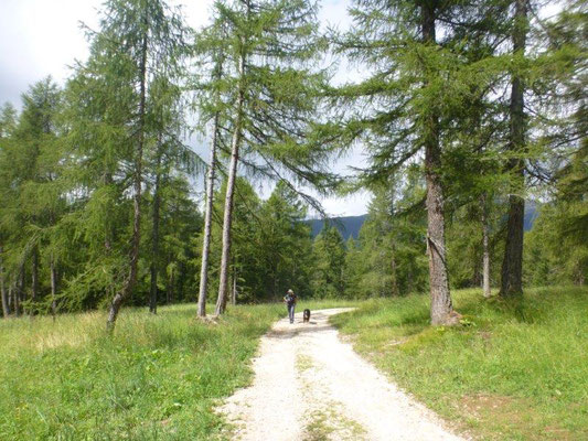 Lärchenwald auf dem Weg zum Felixer Weiher