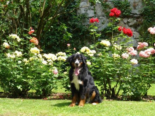 Vreni, das Blumenkind