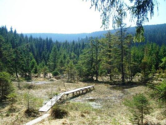Hochmoor unterhalb des Brockens