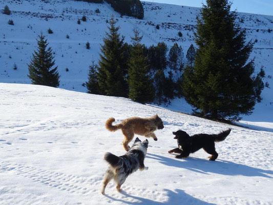 Vreni, Nepomuk und Faye hatten viel Spaß beim Toben im Schnee