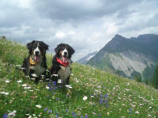 Blühende Bergwiese bei Kals