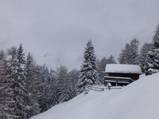 Und wir kamen in einen wunderschönen Winterwald