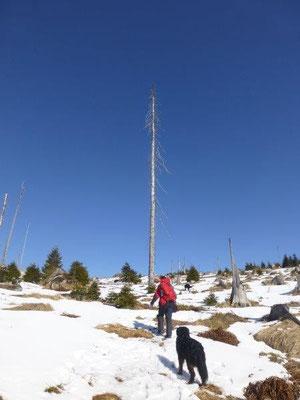 Winterwanderung zum Dreisesselberg