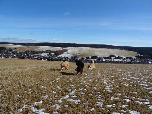 Die Wiesen bei Neudorf laden unsere Fellnasen zum Toben ein