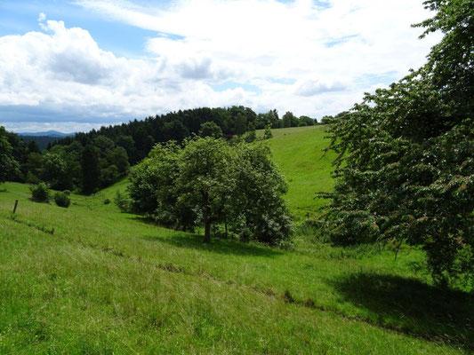 Sanfte Hügel und Streuobstwiesen sind charakteristisch für diese Gegend