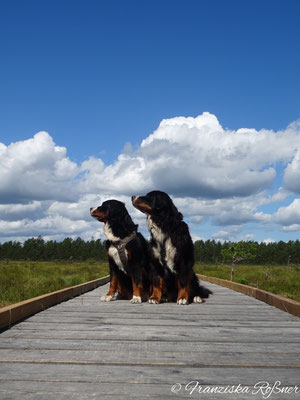 Breite und schmale Holzstege prägen die Wanderwege im Store Mosse Nationalpark