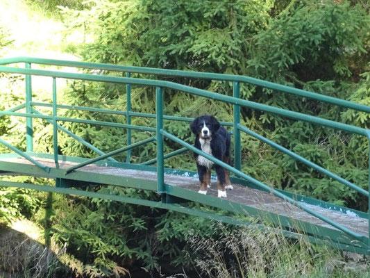 Selma auf der Gitterbrücke